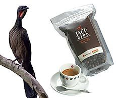jacu_bird_coffee.jpg