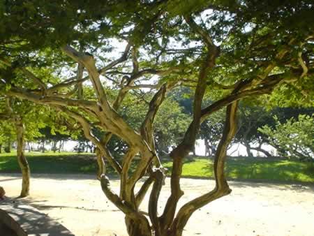 flamendo_tree.jpg