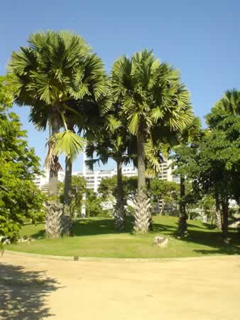 flamengo_tree2.jpg